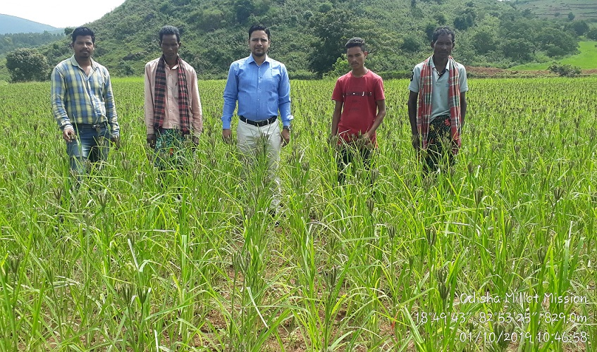 Millet Farmer of Koraput