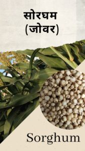 Millet in Hindi