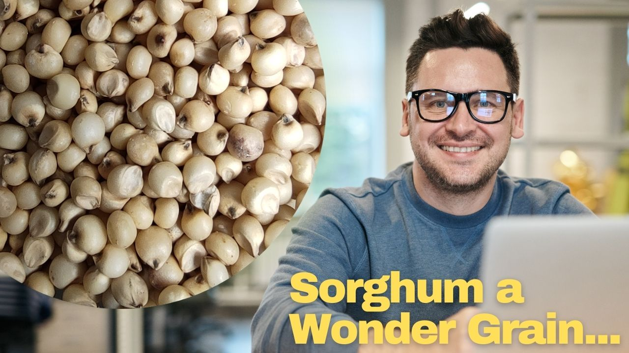 Sorghum a wonder grain