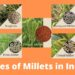 Types of Millets grown in India